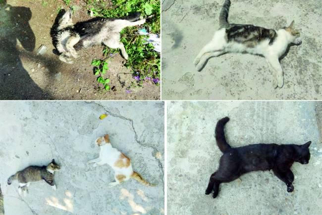 Hayvan Katliamı Sonrasında İpsala'da Hareketlilik Sürüyor